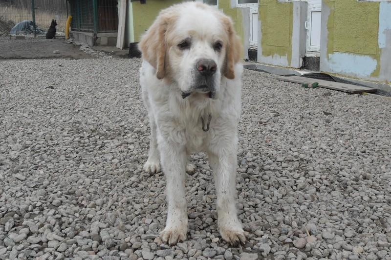 Bezpłatne znakowanie psów w Szczawnie