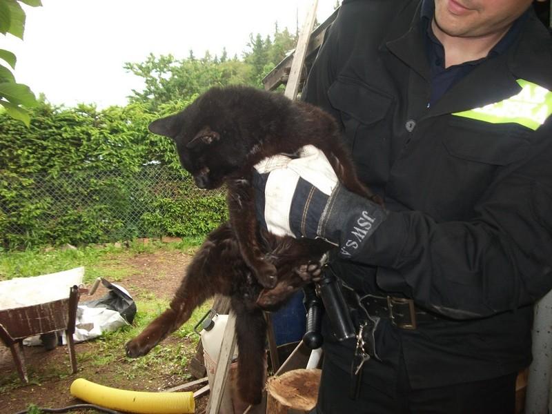 Uratowali rannego kotka