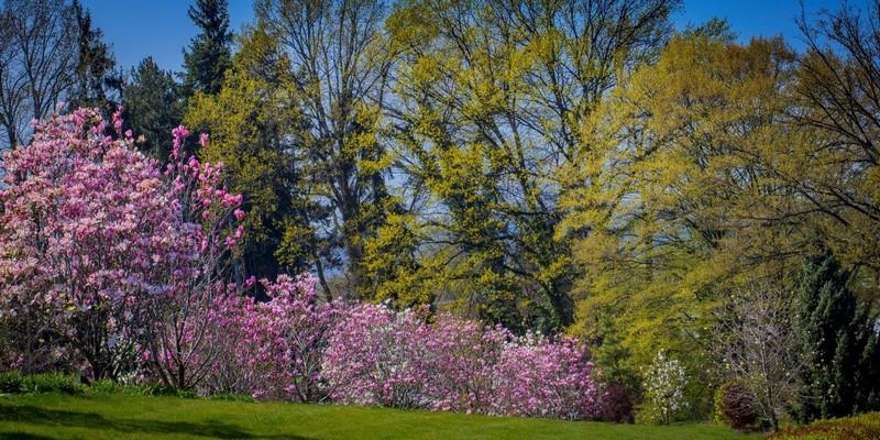 Wiosna w wojsławickim Arboretum