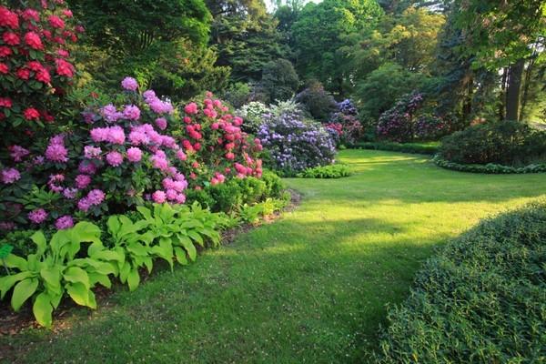 Kwitnące Arboretum