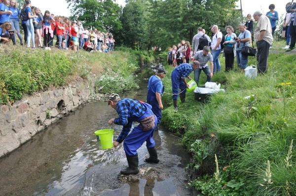 Pstrągi pływają już w Szczawniku